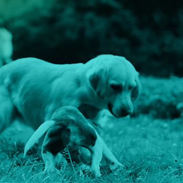 Tiere & Haustiere